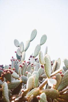Cactus on cactus. | @artifactuprsng on Instagram.