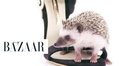 Hedgehogs and 10 Haute Heels: These hedgehogs have found the hottest heels of the season.