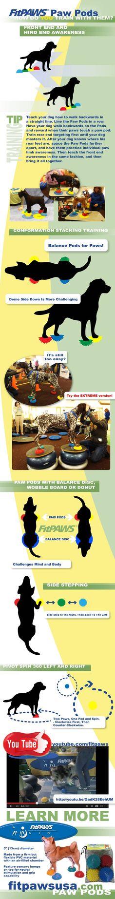 5 Balance Stone Challenges on FitPAWS® Paw Pods - fitpawsusa.com