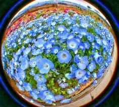 おおた芝桜祭り Oota Shibazakuramatsuri Gunma JAPAN http://nisshingeppo2.files.wordpress.com/2012/04/imgp2260_58_59-hdr_.jpg