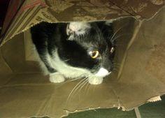 Sammi in a bag!
