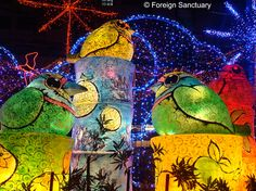 Colorful Bird Lanterns at the Taiwan Lantern Festival Taiwan -----> Lights, Camera, Lantern: The Taiwan Lantern Festival [http://foreignsanctuary.wordpress.com/2014/01/10/lights-camera-lantern-the-taiwan-lantern-festival/]