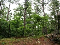 Great secluded location near Riverside TX. This wooded lot is overlooking the private lake in the Lake Forest Estates subdivision. Please contact Walker County regarding septic requirements and Riverside Water for tap fees.