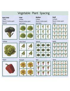 vegetable plant spacing (from My Homestead Gallery)
