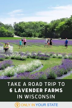Take a road trip and explore these beautiful lavender farms and fields in Wisconsin. Some of the best flower farms in the state, this is a perfect spring adventure for families. Pick your own and find fragrant gifts.