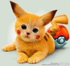 Kittens Cute!! - find discount pet products for your cute kittie over at http://AnimalInstinct.co.uk/?utm_source=pinterest&utm_medium=pin&utm_term=cats&utm_content=desc&utm_campaign=cutepetpics #Cats