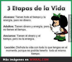 3 etapas de la vida