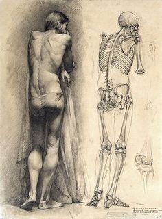 Desenhos da Academia de Moscou - Posterior back semi-nude male figure with corresponding skeleton drawing #figure #drawing