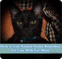 How To Cure Ear Mites In Dogs Naturally