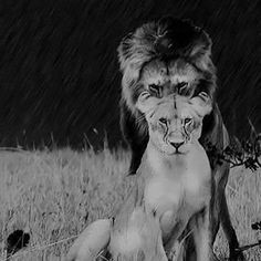 A picture is worth a thousand words. A king is supposed to protect his queen, just as the queen is supposed to protect her king. It doesn't matter what is in front of her as long as she knows who is behind her. It's also up to the queen to give the king something to respect. Start from the bottom and work your way to the top together...... And that is what I'll wait for.