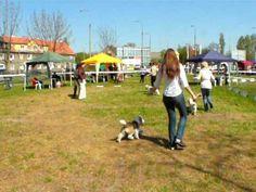 Dog Show - Opole 2009 - www.pbgv.pl - PRET-A`-PORTER Pangea cz. 4