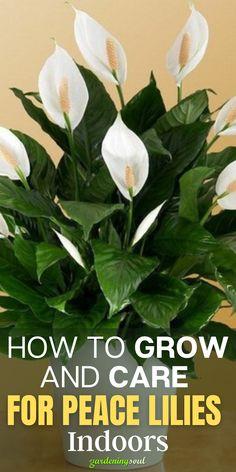 House Plant Care, House Plants, Peace Lily Plant Care, Household Plants, Growing Plants Indoors, Inside Plants, Best Indoor Plants, Bedroom Plants, Container Plants
