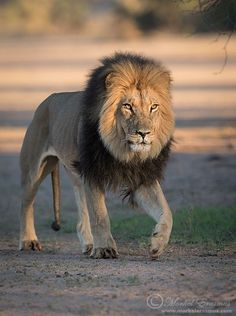 Confidence by Morkel Erasmus on 500px