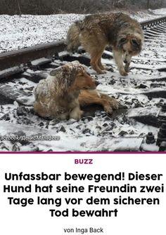 Nachdem das Signal des anfahrenden Zugs ertönte, legte sich der männliche Hund zu der Hündin auf die Gleise. Beide Tiere haben dann ihre Köpfe gesenkt und der Zug ist über sie gefahren. Der Hund hat das zwei Tage hintereinander so gemacht.