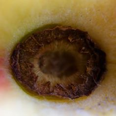 Look into the eye of a peach! #macro #olloclip #peach