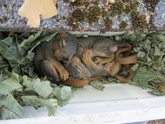 8 Lazy Squirrels Trying To Get Comfortable In Weird Places