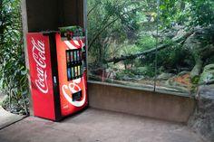 Cola vending machine, Tiger cage, Singapore Zoo