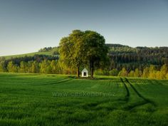 Lovely field in Czech Republic
