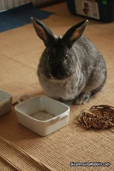 Disapproving rabbits.                                                            The dish is empty. As is my heart. As is your skull.