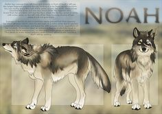 Noah🏅alpha male🏅looking for a mate🏅 wishes for pups🏅wolf🏅ME Wolf Character, Character Design, Cute Animal Drawings, Dog Drawings, Art Style Challenge, Wolf Artwork, Fantasy Wolf, Wolf Design, Anime Animals