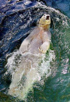 Bucket list: meet a polar bear Bear Photos, Bear Pictures, Animal Pictures, Animals And Pets, Funny Animals, Cute Animals, Animals Planet, Wild Animals, Sloth Bear