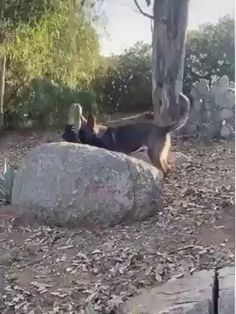 Dog and crow are best friends Funny Animal Videos, Cute Funny Animals, Funny Animal Pictures, Cute Baby Animals, Funny Dogs, Animals And Pets, Puppies And Kitties, Cute Puppies, Doggies