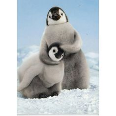 """Our Emperor Penguin Chicks Birthday card makes for a cool and cuddly way to say Happy Birthday. The inside of this 4"""" x 6"""" card reads""""Feel the love! Happy Birth"""