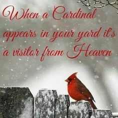 When a Cardinal appears in your yard it's a visitor from Heaven. https://scontent-b-ord.xx.fbcdn.net/hphotos-xap1/v/t1.0-9/10806496_10200128809019331_8441274811079161031_n.jpg?oh=29f55a4908c47702fbde4b314c832759&oe=550B4984