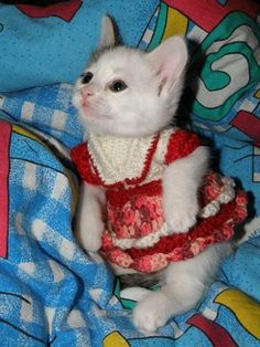 When I was little, I dressed up many a cat. This is a photo that reminds me