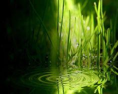 Grass Ripples