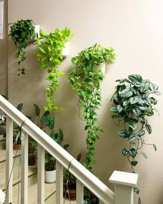 Indoor Gardens For Your Home Room With Plants, House Plants Decor, Plants In Bedroom, Easy House Plants, Indoor Plant Wall, Indoor Plants, Wall Hanging Plants Indoor, Wall Garden Indoor, Hang Plants On Wall