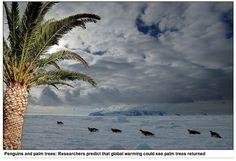 Noordpoolgebied resten van tropisch regenwoud aardrijkskunde taak