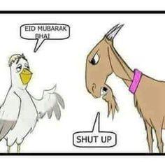Bakra Eid Joke in Hindi Funny Eid Mubarak, Eid Mubarak Status, Eid Mubarak Photo, Eid Mubarak Quotes, Eid Mubarak Images, Eid Mubarak Wishes, Eid Status, Jokes Images, Funny Images