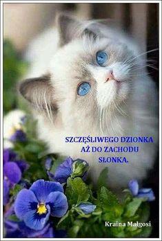 Cats And Kittens White Blue Eyes 29 New Ideas - Katzenrassen Beautiful Cats Cute Cats And Kittens, Cool Cats, Kittens Cutest, Pretty Cats, Beautiful Cats, Animals Beautiful, Pretty Kitty, Pretty Animals, Gorgeous Eyes