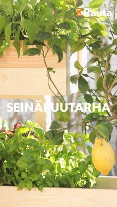 Nosta kasvimaa pystyyn! Kokoa seinäpuutarha käteväksi hyötypuutarhaksi ja terassin näkösuojaksi tai pihan silmäniloksi. Keto, Herbs, Outdoors, Garden, Plants, Home, Garten, Lawn And Garden, Ad Home