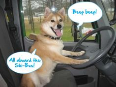 Wouldn't want to miss this Shi-Bus! #shiba