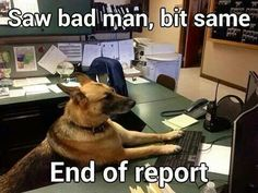 Sometimes, one sentence is all you need for an in-depth report. #K9 #Funny