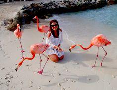 Flamingo Beach, Renaissance Island in Aruba Clayton wants to get married here too! Vacation Destinations, Vacation Spots, Southern Caribbean, Aruba Caribbean, Flamingo Beach, Pink Flamingos, Summer Checklist, Beaches In The World, Destin Beach