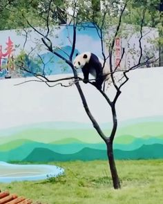 Cute Little Animals, Cute Funny Animals, Cute Dogs, Cute Animal Videos, Funny Animal Pictures, Panda Gif, Tier Fotos, Cute Panda, Cute Creatures
