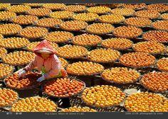 台灣旅訊網-景點圖庫-新竹縣市-味衛佳觀光果園