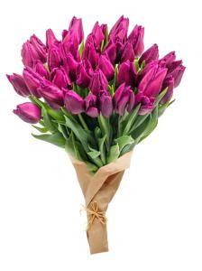 Тюльпаны фиолетовые 21 шт. Букет фиолетовых тюльпанов. (Испания)