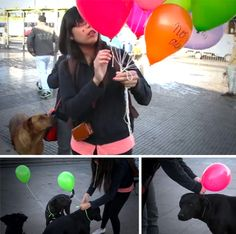 """Urban Intervention: Homeless Dogs Are Given Hope-Filled and Attention-Grabbing Balloons.  On each balloon they write powerful messages like """"No me abandone"""" (Don't abandon me) and """"Abrazame"""" (Hug me)."""