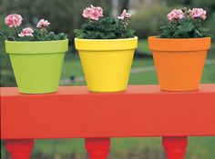 Leftover paint in Juicy Red, Luscious Lime, Lemon Drizzle and Moroccan Flame Gloss has been used to transform ordinary terracotta flowerpots into an eye-catching display. Flower Pot Design, Lemon Drizzle, Garden Pots, Terracotta, Cool Furniture, Flower Pots, Upcycle, Cactus, Planter Pots