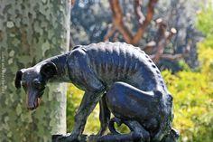 El perro abandonado · Zoo de Barcelona | por Ana López Heredia
