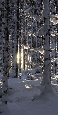 ideas for winter landscape snow sun Winter Szenen, Winter Magic, Winter Time, Winter Light, Winter Photography, Landscape Photography, Nature Photography, Snow Scenes, Winter Photos