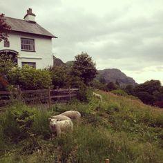 loch affric dundreggan estate glenmoriston destinations