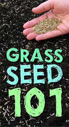 Click here to learn all you need to know about grass seed! #grass #seed #101