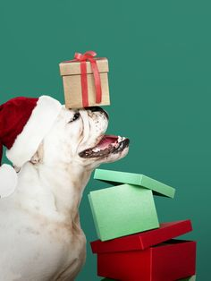 Tips To Train And Bond With Your Dog. If you are looking for tips on training your dog, whether for the show ring or simply for a place of honor in your home, then the tips provided here should Cute Bulldog Puppies, Cute Bulldogs, Adorable Puppies, Dog Quotes Funny, Funny Dogs, Instagram Picture Quotes, Christmas Puppy, Christmas Holidays, Christmas Cards
