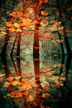 Autumn Leaves by Eredel on deviantART