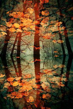 Autumn Leaves by Eredel on deviantART